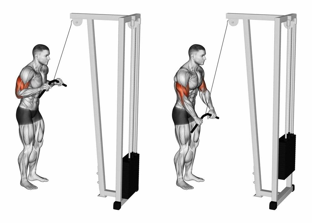 Bài tập Triceps Cable Rope Pushdown