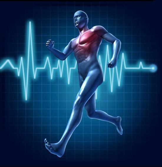 Xác định nhịp tim tối đa và lượng calo đốt cháy cần thiết để giảm cân hiệu quả